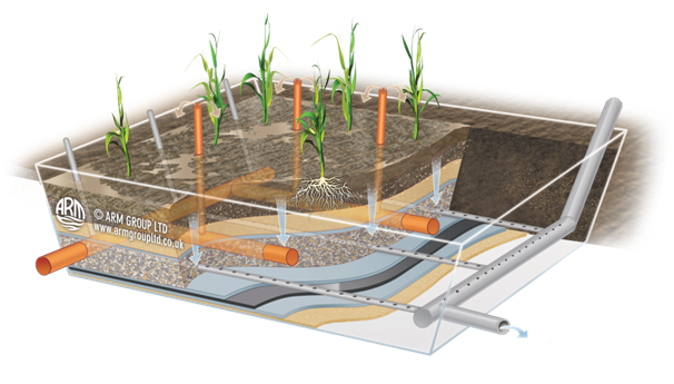 Sludge Treatment Reedbed